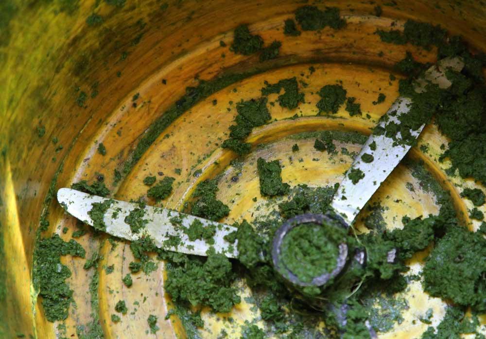 Les feuilles broyées